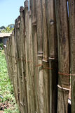 Bamboo fence. Fence made of bamboo in a farm royalty free stock image