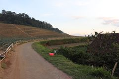 Bamboo fence along the road. hillside vegetable plantations. weeds on the side of the road royalty free stock photography