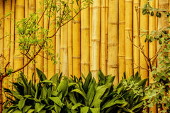 Bamboo fence in asian garden Stock Photo