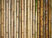 Bamboo fence. Background, close up Royalty Free Stock Images