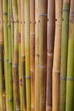 Bamboo fence background. Royalty Free Stock Photography