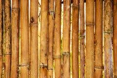Bamboo fence background Stock Image