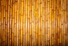 Bamboo fence background. Stock Photo