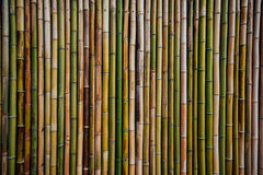 Bamboo fence background texture Stock Photo