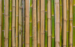 Bamboo fence background texture pattern Royalty Free Stock Photos
