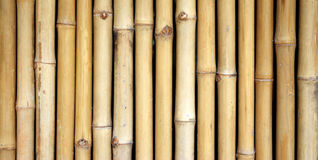 Bamboo fence background. Stock Photography