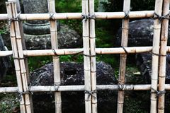Bamboo fence. Tied together forming squares Stock Image