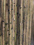 Bamboo Fence. A brown bamboo fence at an angle Royalty Free Stock Photos