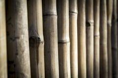 Bamboo fence Royalty Free Stock Image