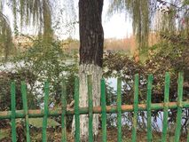 Bamboo fence in a chinese park with an isolated willow tree and a lake background stock photography