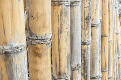 Bamboo fence. Close up bamboo fence background Stock Photography