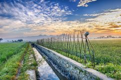 A bamboo fence and a ditch in the middle of vast rice fields. Leading to the horizon Stock Images