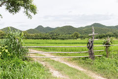 Bamboo fence and gate Stock Images