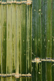 Bamboo fence green Stock Images