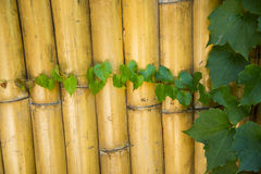 Bamboo fence, green leaf Stock Images