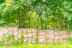 Bamboo fence with green leaves . Stock Photo