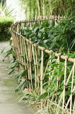 Bamboo fence. And green plant Stock Photos