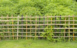 Bamboo fence with green plant Stock Photography