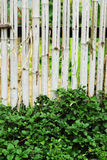 Bamboo fence - green tree. Royalty Free Stock Photography