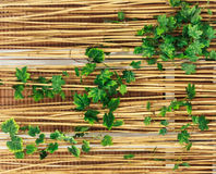 Bamboo fence with ivy Stock Photo