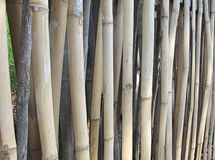 Bamboo fence lined background. Stock Images