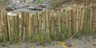 Bamboo fence make as dam Royalty Free Stock Photo