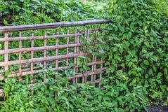 Bamboo fence. In my backyard Stock Photos