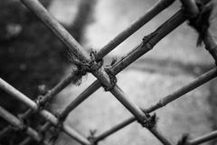 Bamboo Fence. Old bamboo fence held together with rope Royalty Free Stock Photography