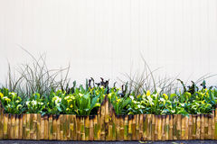 Bamboo fence with Ornamental plants Stock Images