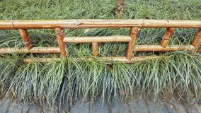 Bamboo fence in a park. Royalty Free Stock Images