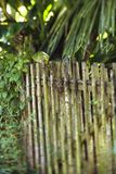 Bamboo fence with plants Royalty Free Stock Image