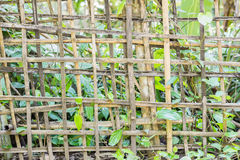 Bamboo fence. Stock Photo
