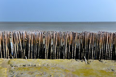 Bamboo fence protect the coast from wave. In outdoor sunlight Stock Photography
