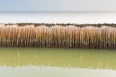 Bamboo fence protect sandbank Stock Photos