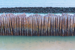 Bamboo fence protect sandbank from sea wave Stock Image