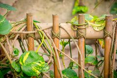 Bamboo fence in a zoo. Bamboo fence with rope in a zoo Stock Photos
