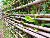 Bamboo Fence with Small Plant Stock Image