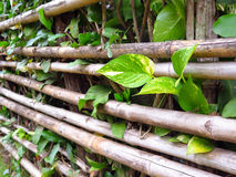Bamboo Fence with Small Plant Stock Photos
