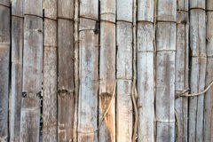 Bamboo fence. Sun shine down on the bamboo fence Stock Photos
