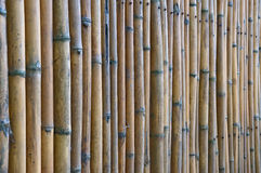 Bamboo fence, Thailand. Bamboo fence as texture with parallel sticks Royalty Free Stock Image