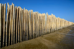 Bamboo fence under blue sky Stock Photography