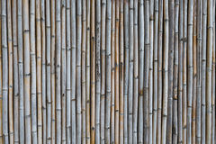 Bamboo fence , vintage style Stock Images