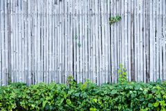 Bamboo fence wall background and texture with green plant decoration. Nature surface royalty free stock photos