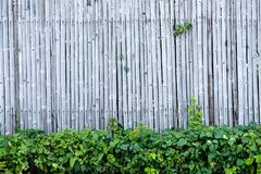 Bamboo fence wall background and texture with green plant decoration. Nature surface stock photography