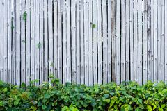 Bamboo fence wall background and texture with green plant decoration. Nature surface royalty free stock photo