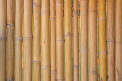 Bamboo fence wall texture pattern for background Stock Image