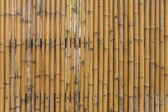 Bamboo fence wall texture pattern for background Stock Photos