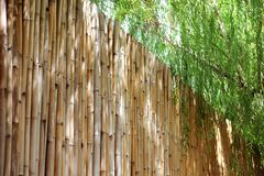 Bamboo fence and weeping willow tree on sunny day with beautiful light. Bamboo fence with weeping willow tree on sunny day with beautiful light through stock image