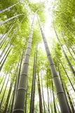 bamboo field Stock Photos