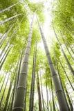 bamboo field Stock Photos